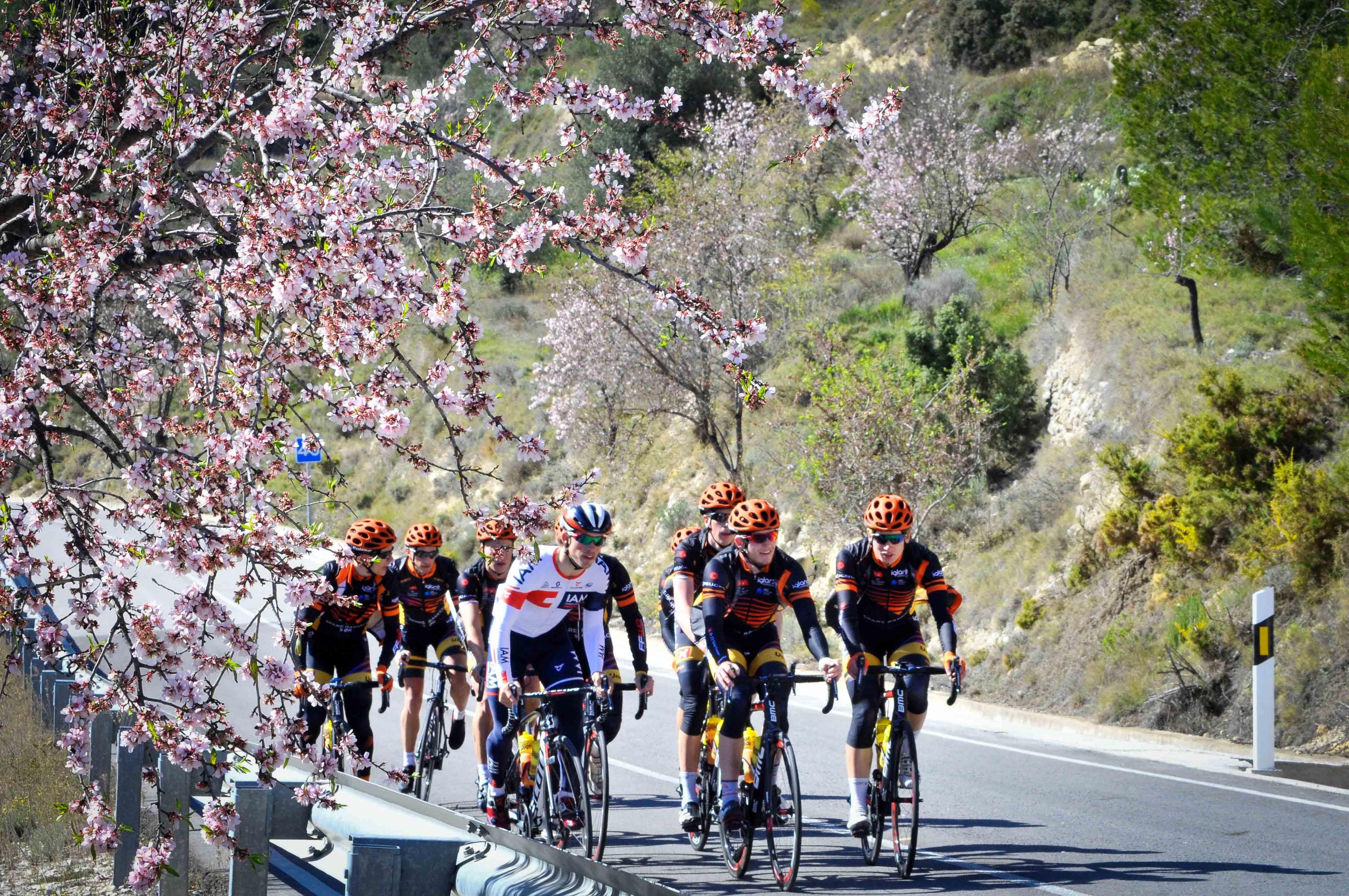 På trening: God stemning både på og av sykkelen med denne gjengen. Her under mandeltrær i blomstring. (Foto: Tore Sæther / Team Sparebanken Sør)